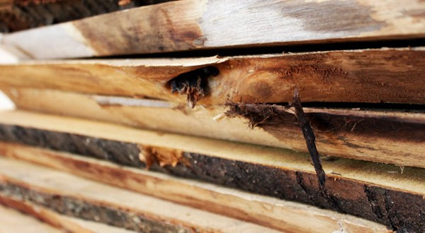 Woodi Rohstoff